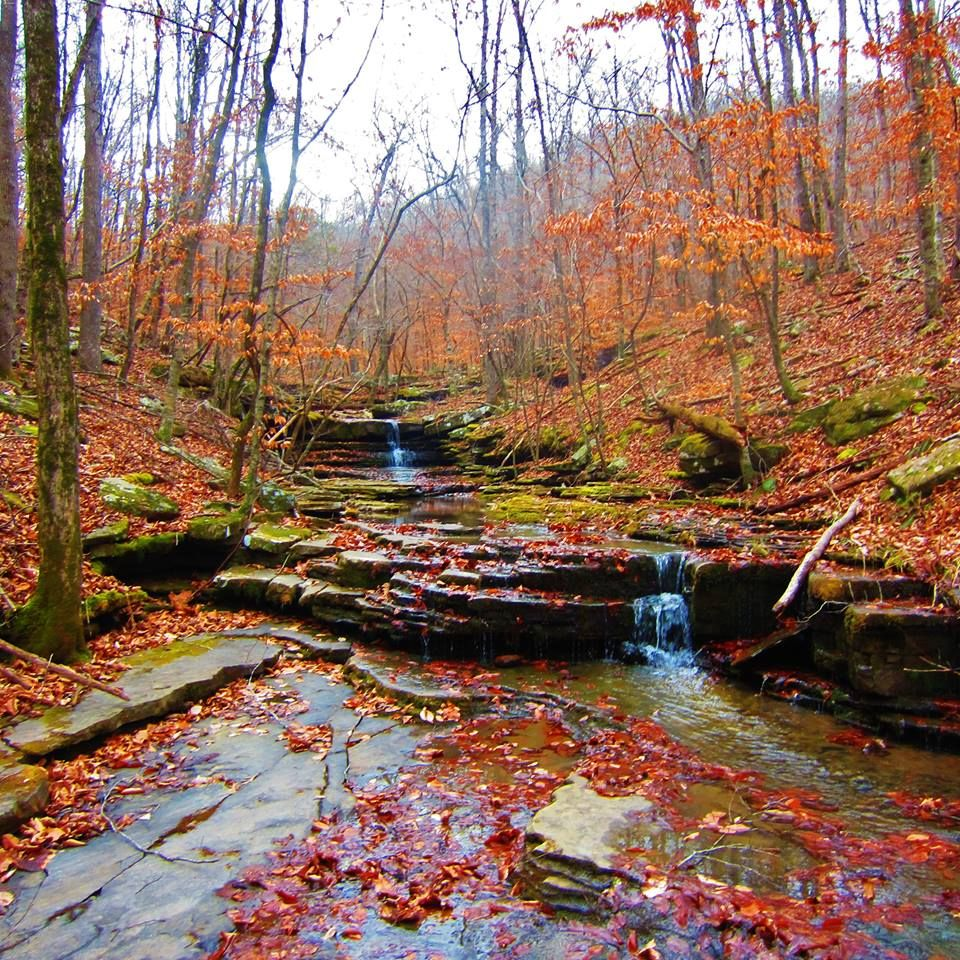 Ozark National Forest Newton County Arkansas Hiking The Ozarks Photo Ozark National Forest Arkansas Camping Landscape Pictures