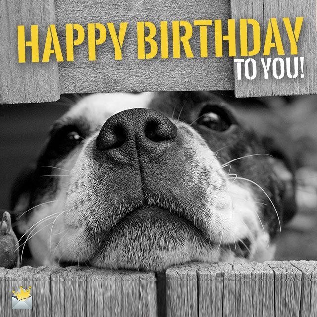 Two Words From Cute Animals Happy Birthday Happy Birthday Dog