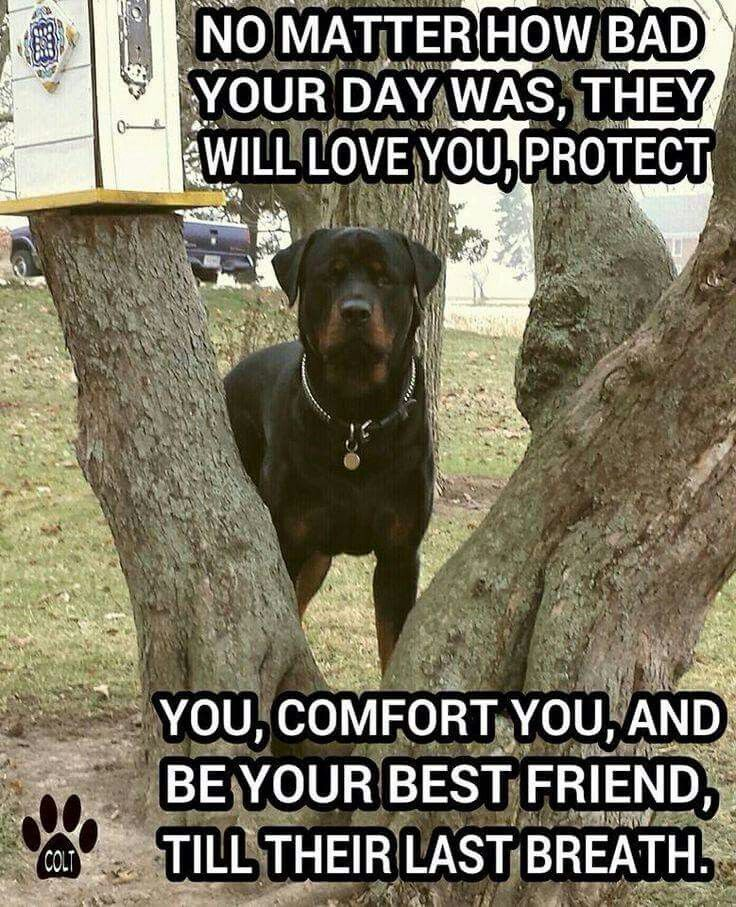 Love My Rottweiler Rottweilers Pinterest Dogs Rottweiler And