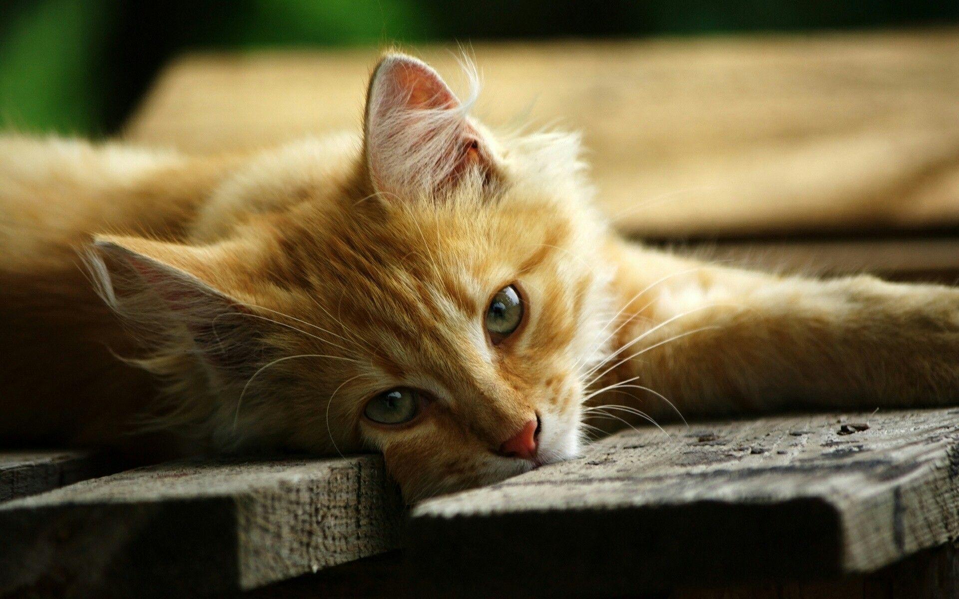 Idea By Maggi On Purrrrr Cats Kittens Animals