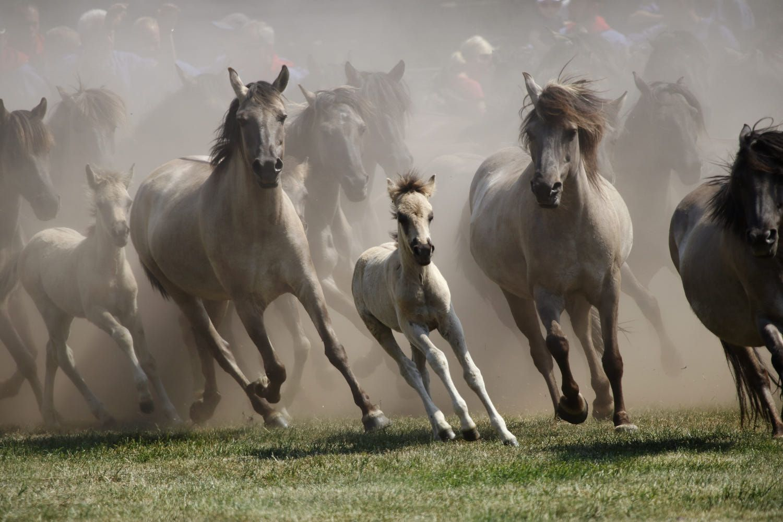 Rabid Horses In Germany! - HD1500×1000