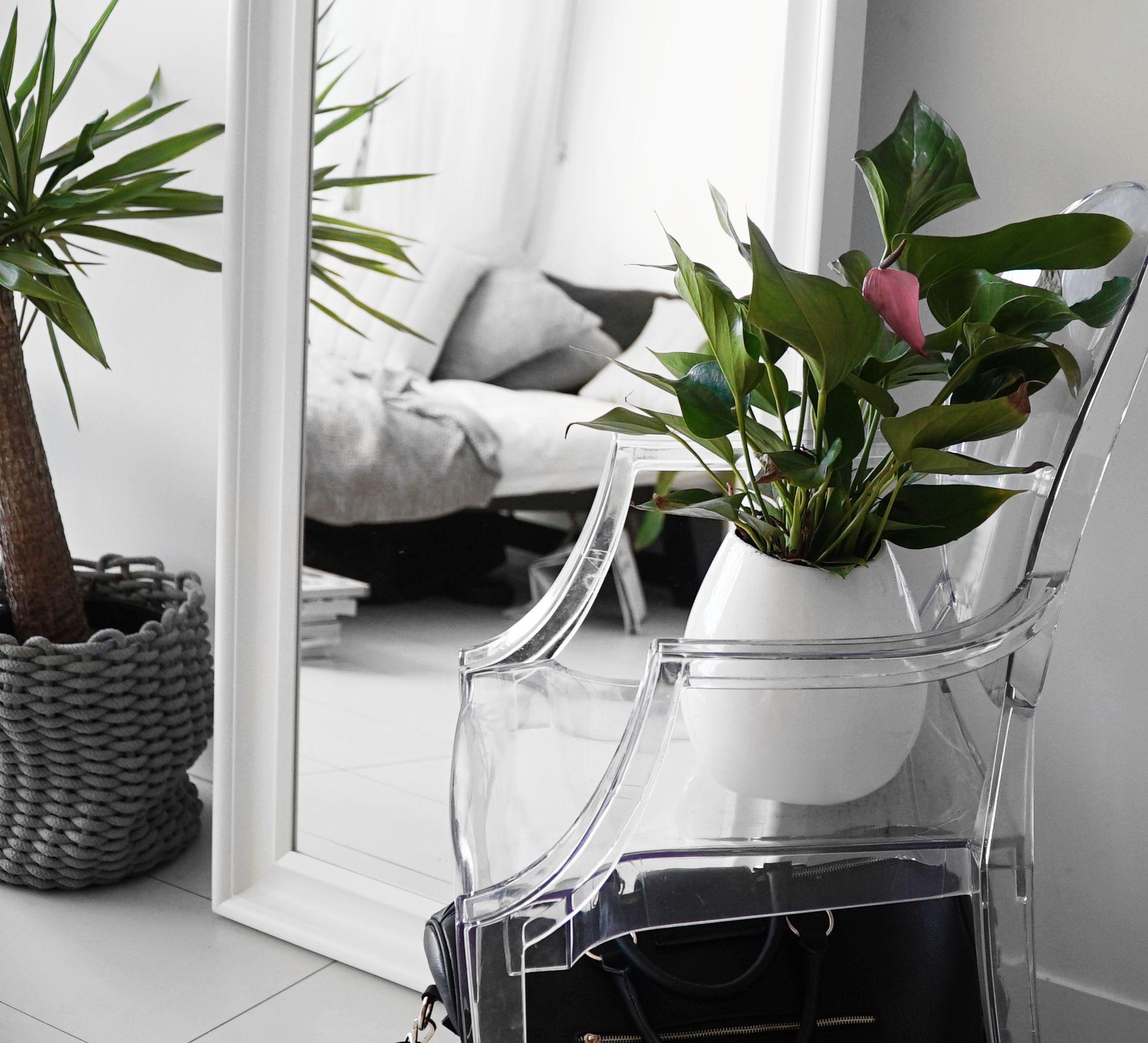 Living room plants   Plants   Pinterest   Living room plants, Living ...