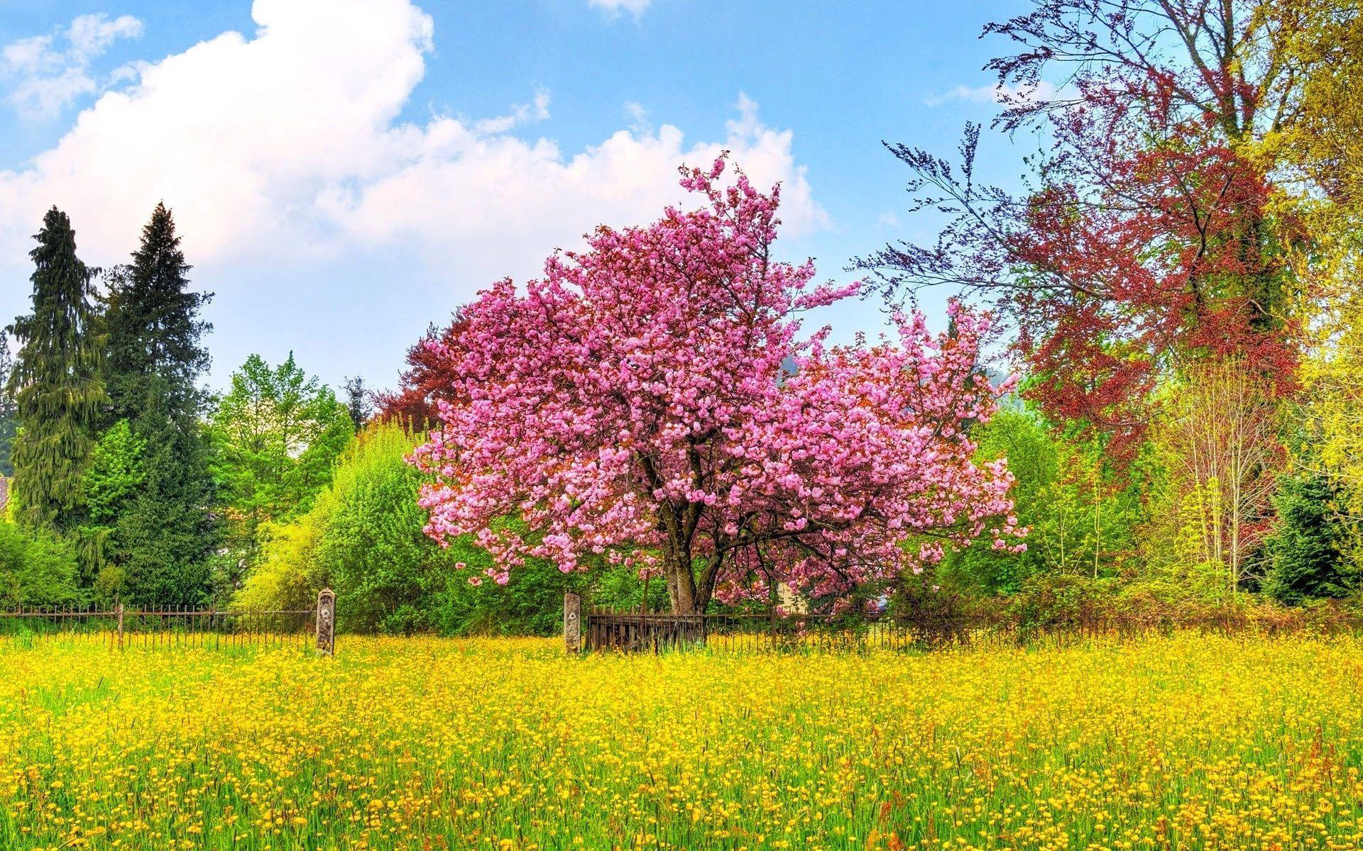 Arbre Automne Campagne Champ Ciel Cloture Couleurs Fleur Nuage Fond Ecran Nature Belle Nature Fond Ecran Paysage