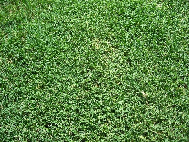 Which Type Of Grass To Plant In El Paso Bermuda Grass Seeding Lawn Grass Seed