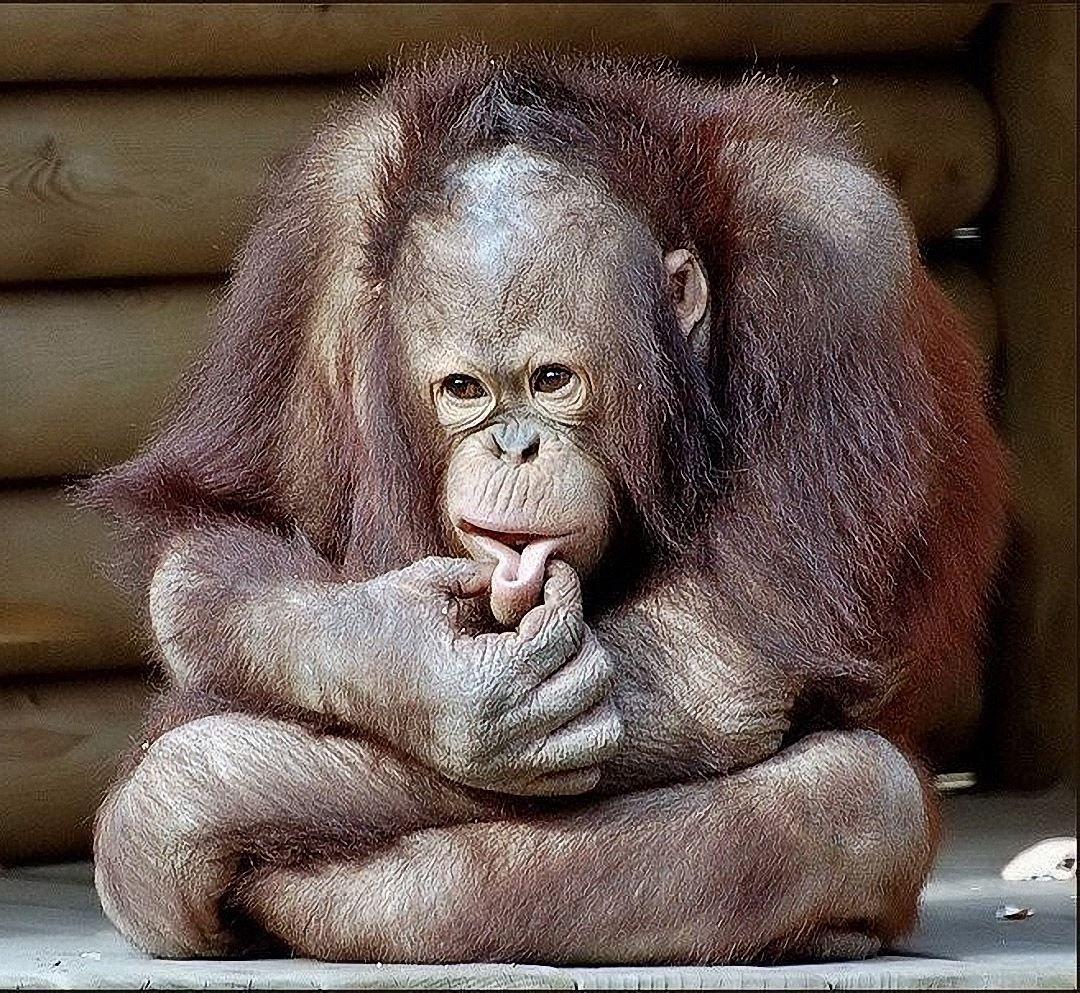 Смешные картинки с обезьянами фото с надписями, вредный такой
