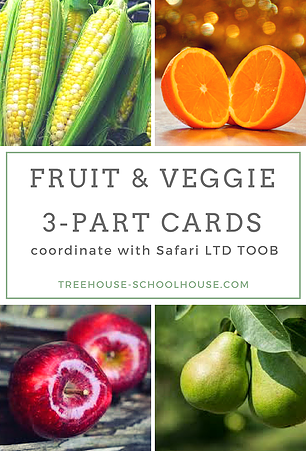 picture relating to Printable Fruit and Vegetables called Fruit Vegetable 3-Portion Playing cards that coordinate with Safari