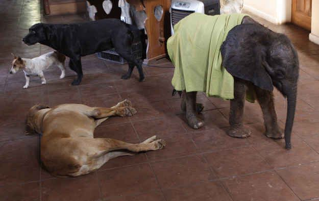 Photos That Prove Elephants Make The World A Better Place Dog - 22 photos proving animal world better place