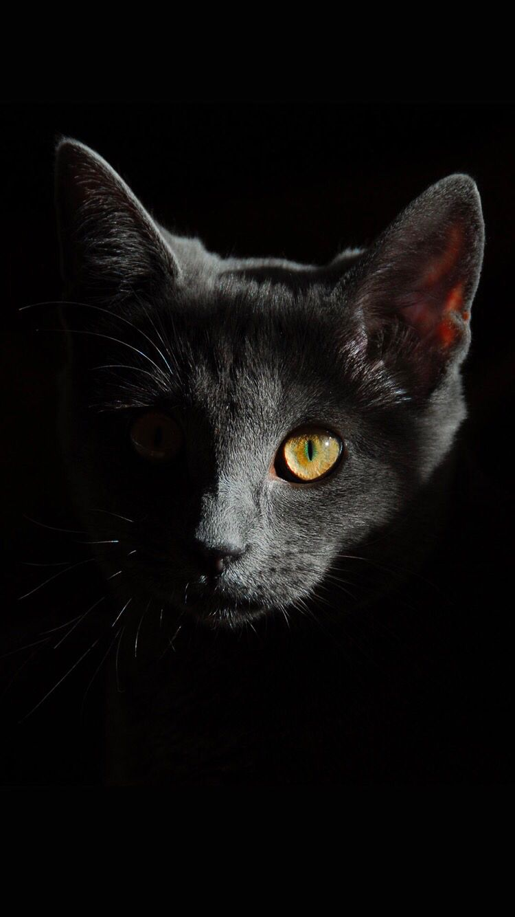 Black Cat Wallpaper For Your Iphone X From Everpix Iphone