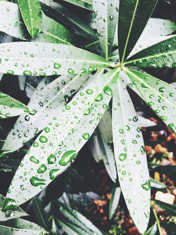 leaf, close-up, leaf vein, drop, nature, wet, green color, natural pattern, water, leaves, growth, high angle view, plant, beauty in nature, season, day, outdoors, no people, focus on foreground, pattern