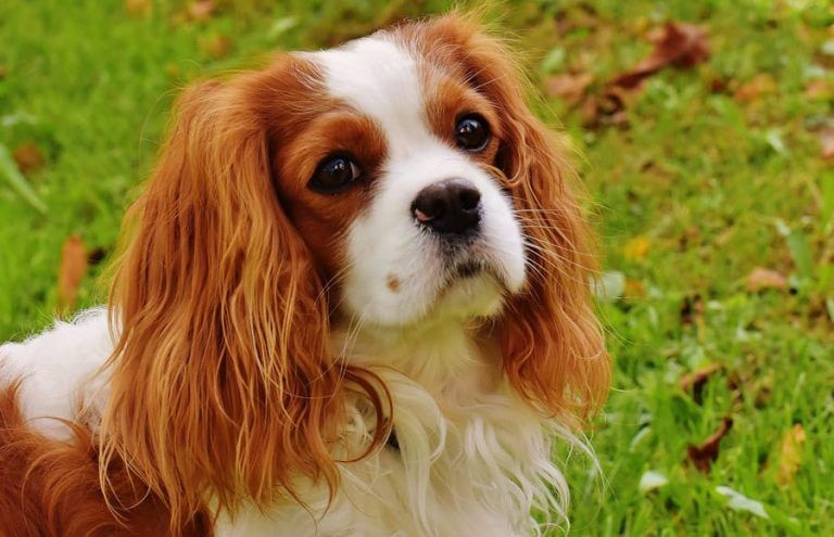 British Dog Names Awesome Name Ideas For Your Pup 145 Names British Dog Dog Names Cavalier King Charles