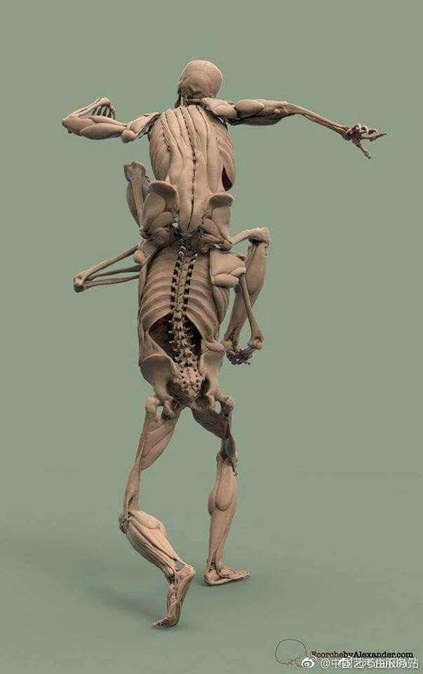 Pin de Nano Scofield en Poses | Pinterest | Anatomía, Escultura y ...