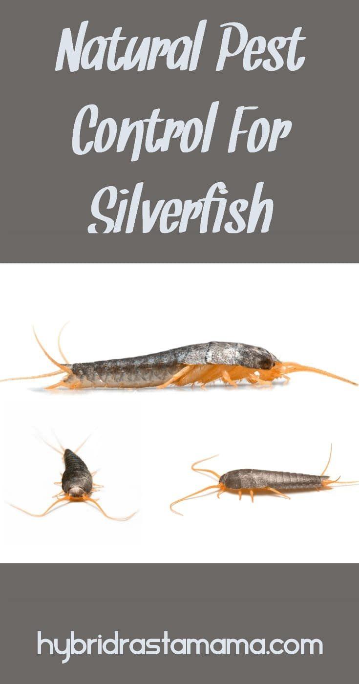 25a4dfd423e3054f7188827e9a5e2e1f - How To Get Rid Of Silverfish In House Uk