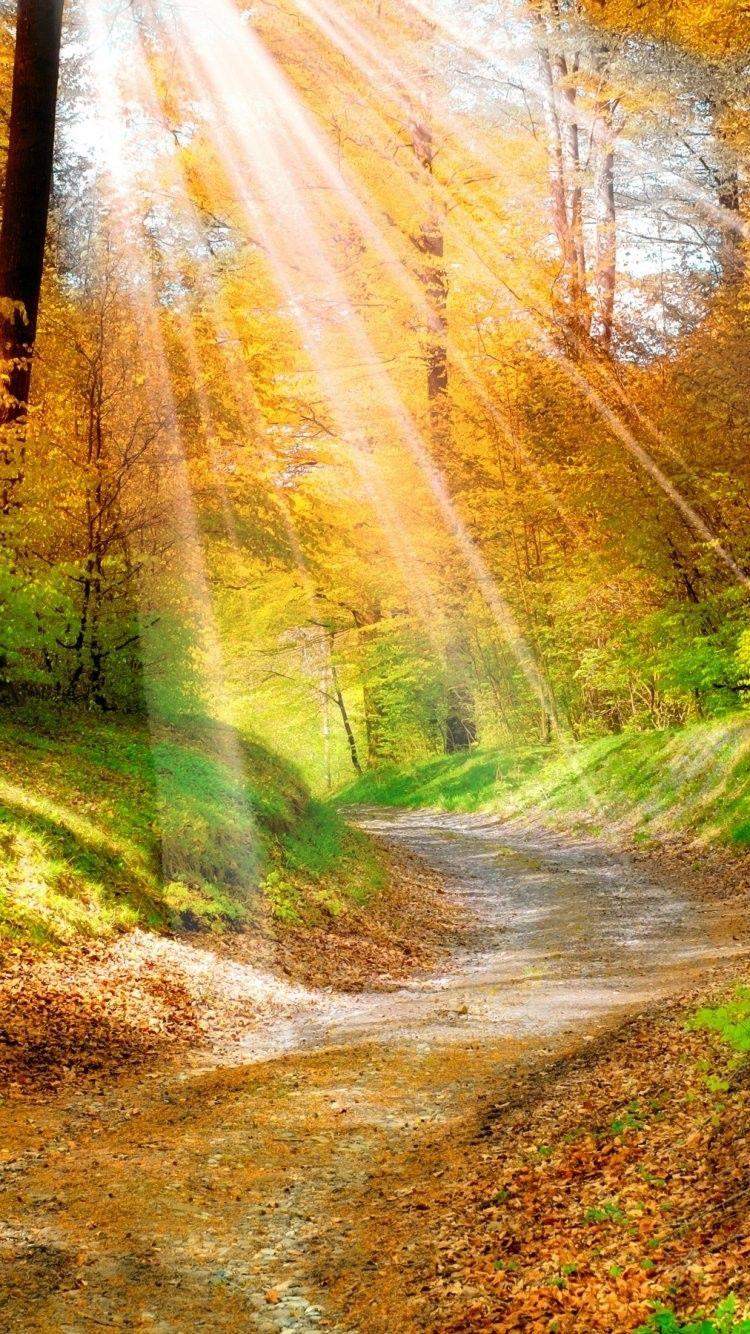 Sunlight iPhone 6 Wallpaper 36044 Nature iPhone 6