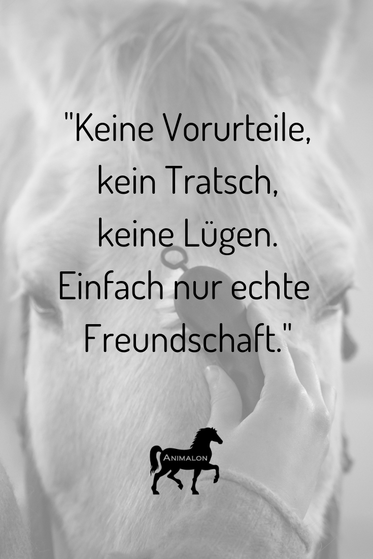 Die Freundschaft zwischen Pferd & Mensch. Keine Vorurteile, kein Tratsch, keine Lügen. Einfach nur echte Freundschaft 😍 #pferdesprüche #pferdezitate #pferdequoten