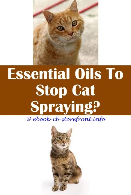 Spray To Deter Cats From Scratching Furniture   Coffee ...
