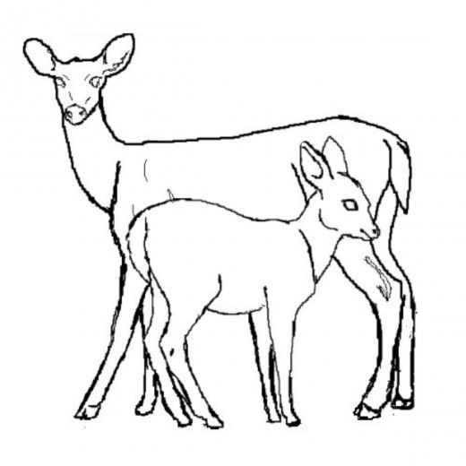 White Tail Deer Coloring Page Whitetaildeercoloringpages 1 Deer