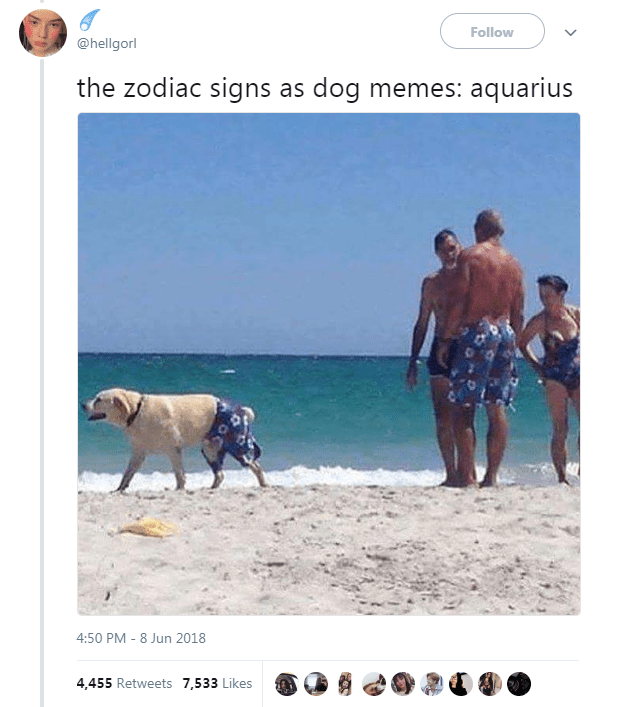The 12 Zodiac Signs As Dog Memes Funny Dog Memes Dog Memes Zodiac Signs Animals