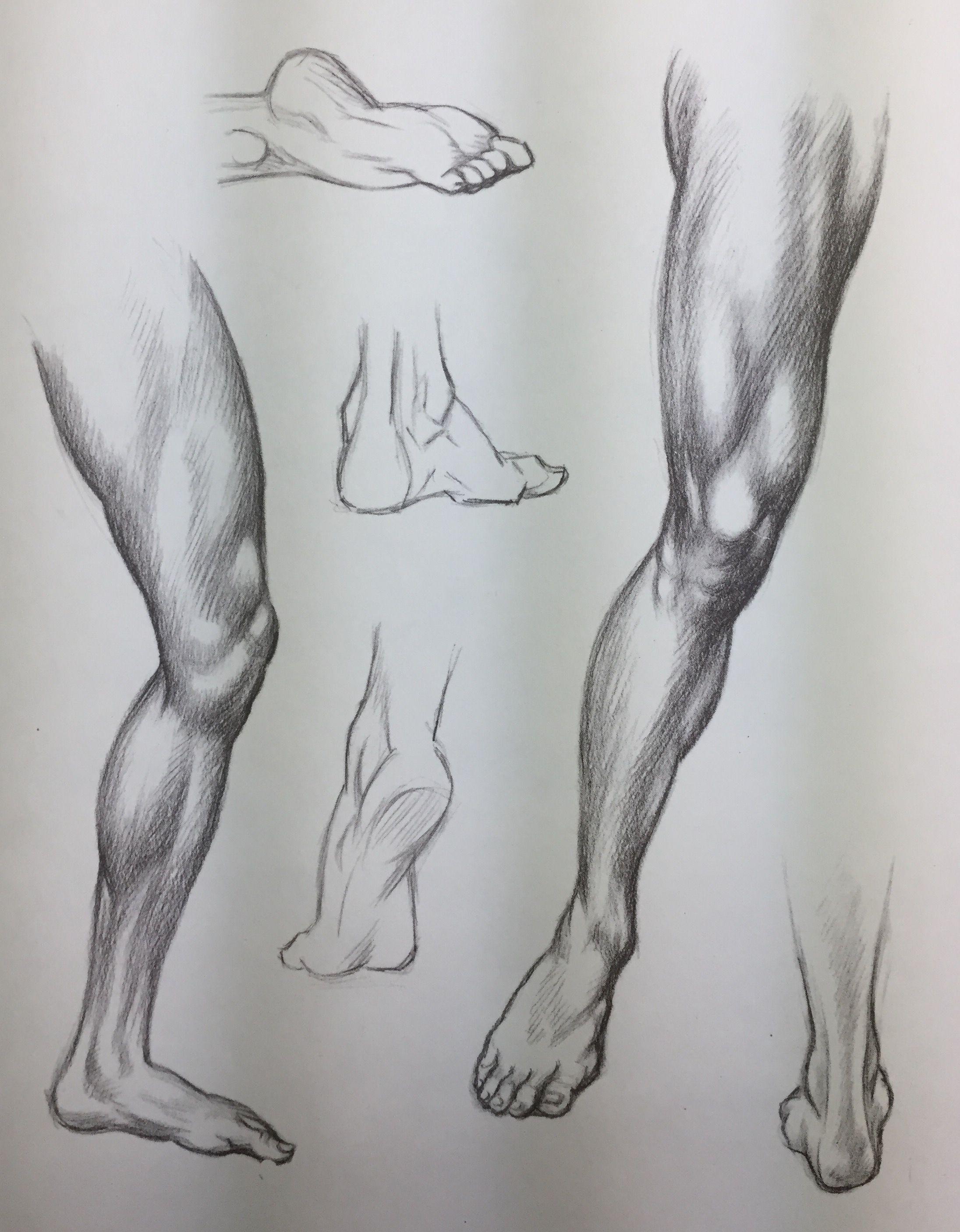 Human Legs Drawing : human, drawing, Yasin, Tolga, Başaran, Didáctica, Human, Anatomy, Sketches,, Drawing