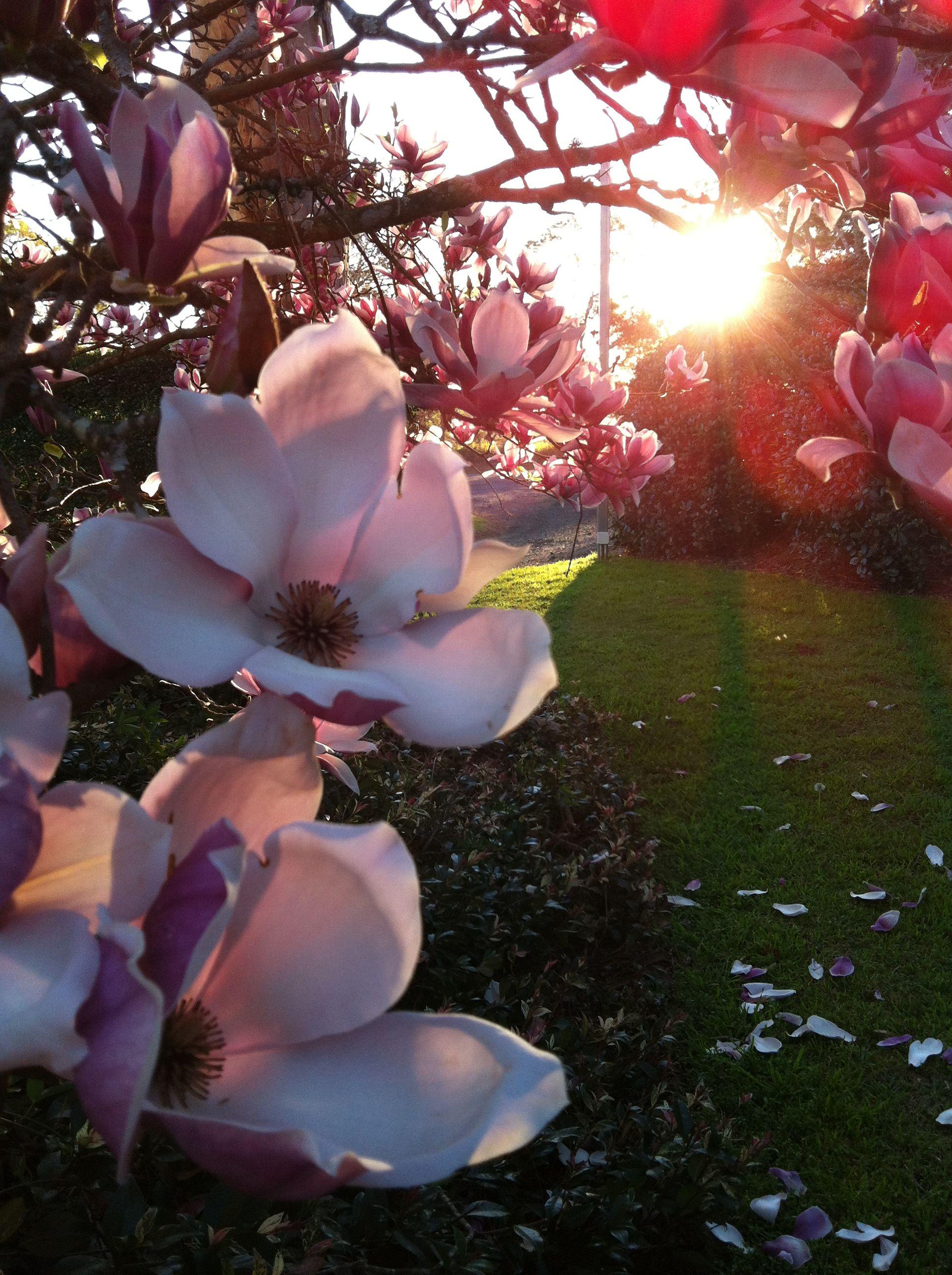 Magnolia Winter Blooms Flower Art Flowers Bloom