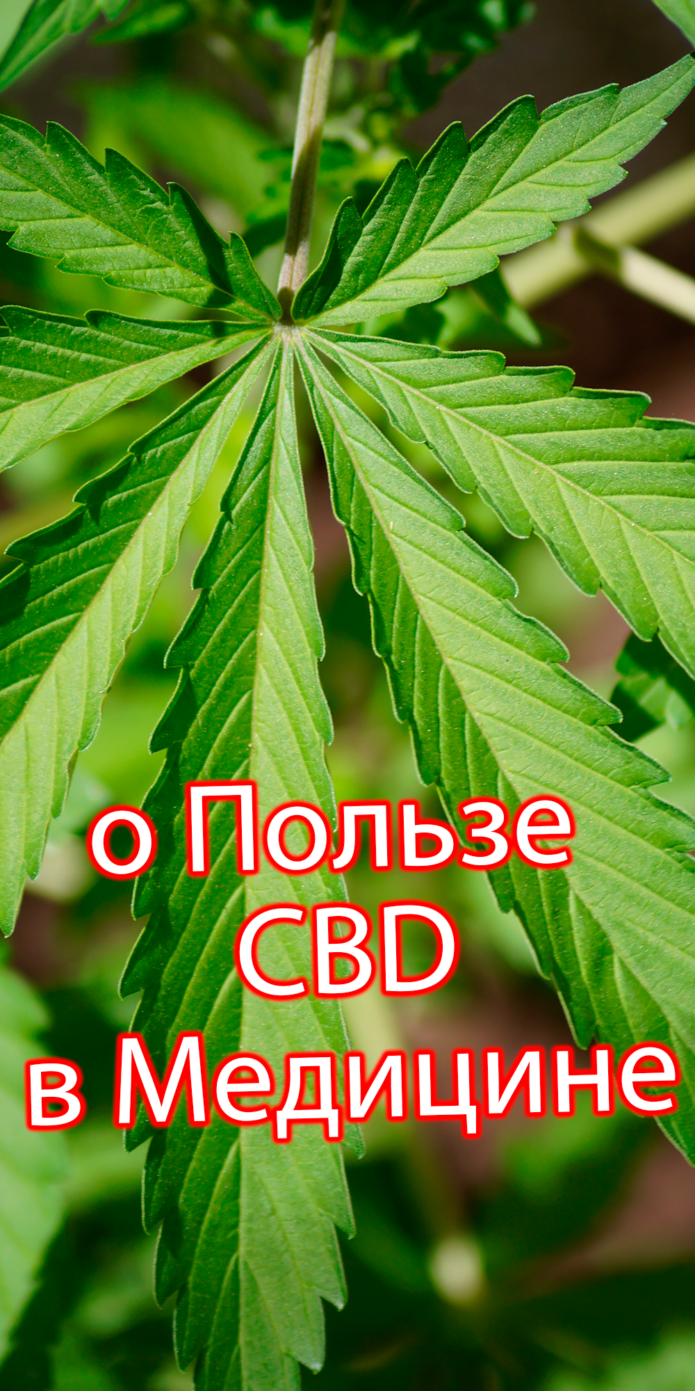 Масло конопли в медицине как продавать марихуану