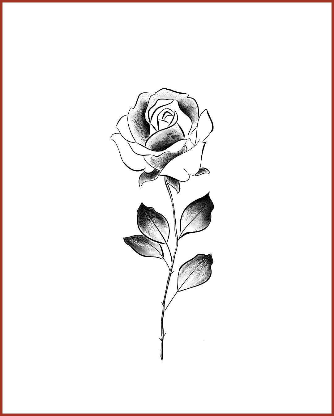 Rose Tattoo Schwarz Und Weiss Umrisse Schwarz