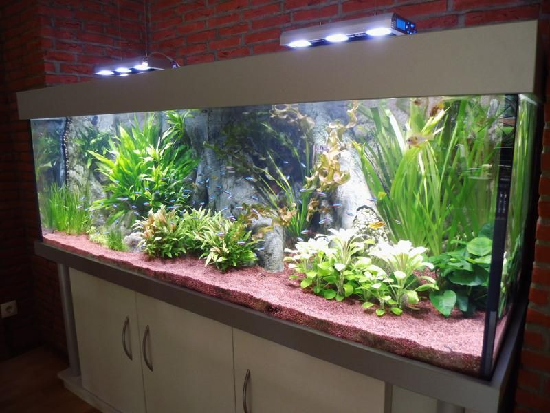 show anlage amazonas sala con peceras aquarium tanked. Black Bedroom Furniture Sets. Home Design Ideas