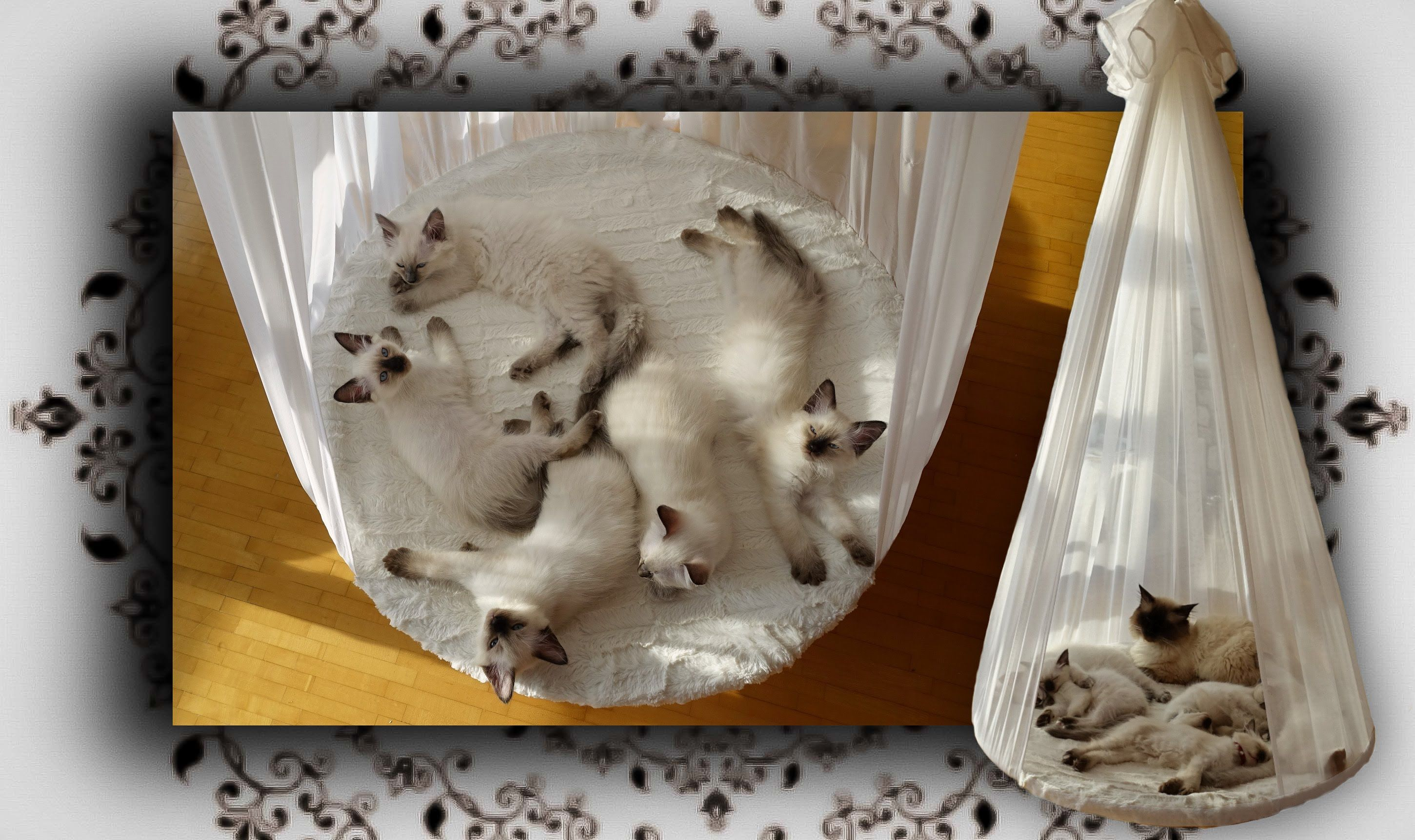Diy himmelbett f r katzen poster bed for cats katzen - Himmelbett diy ...
