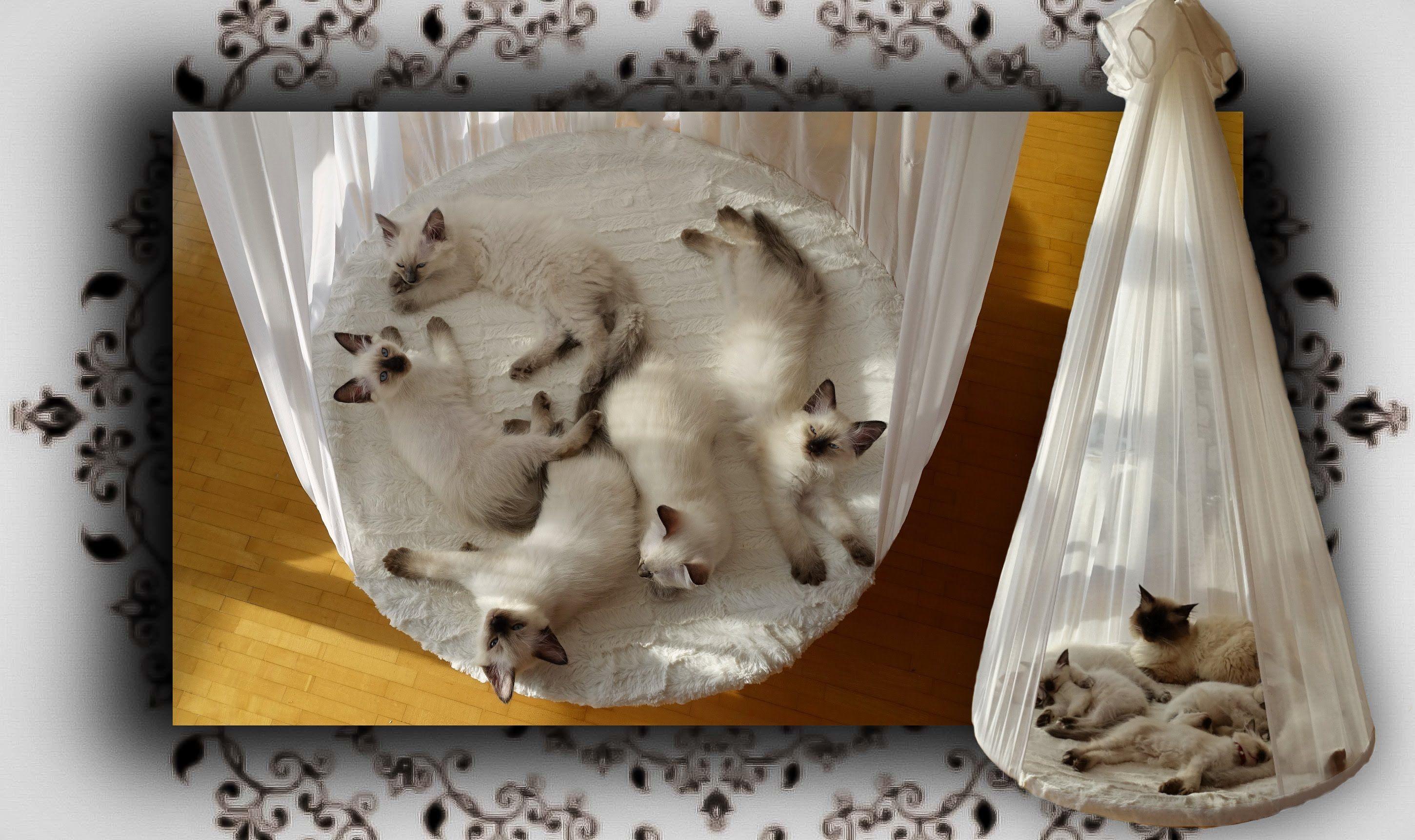 Diy Himmelbett Fur Katzen