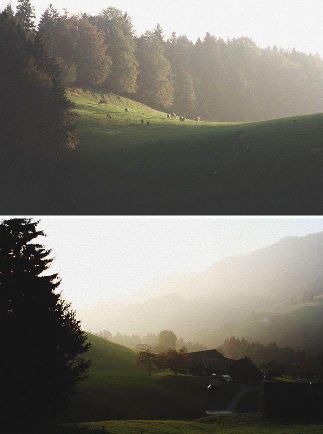 Switzerland, Swiss cows, Swiss hills, fog