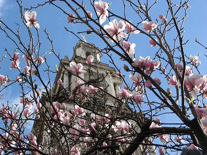 Magnolia london gardens pinterest spring flowers magnolia mightylinksfo