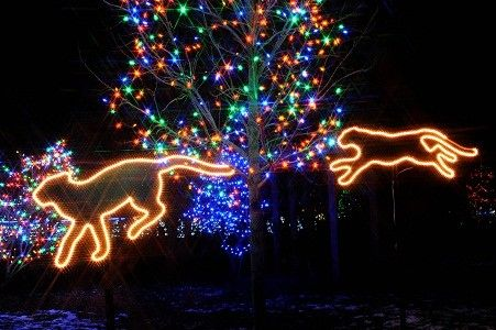 Wonderful Brookfield Zoo Lights Chicago IL 2013 | ... Christmas Light Show At Brookfield  Zoo Good Ideas
