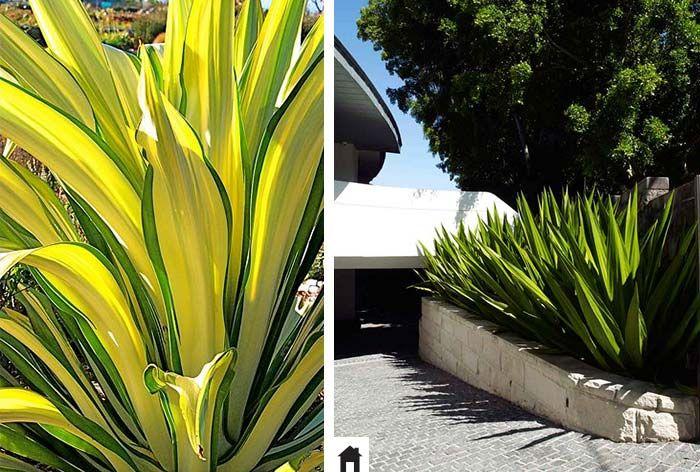 25 plantas resistentes ao sol portal and gardens for Plantas exterior resistentes