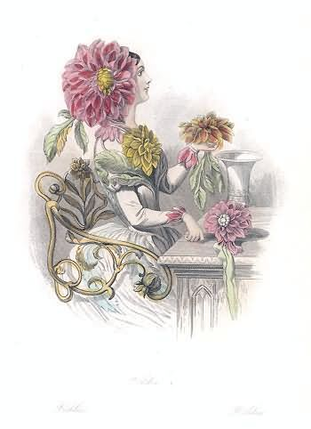 """""""Dahlia"""" by J. J. Grandville from """"Les Fleurs Animées."""" Prints illustrating flowers personified in the form of lovely maidens."""