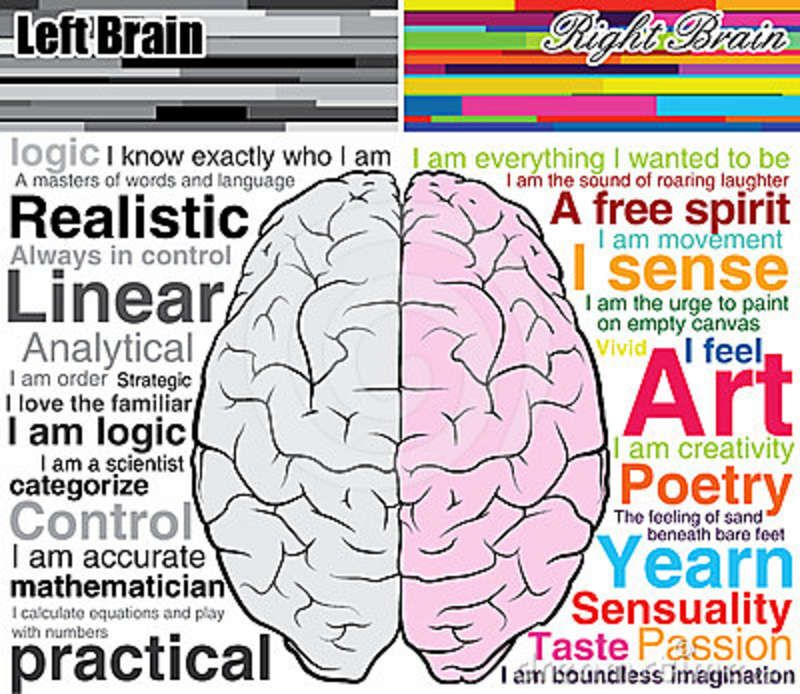 Image result for right brain clipart