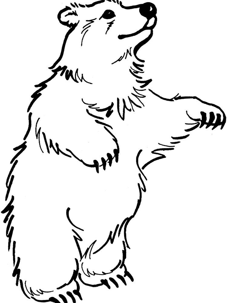 Bear Coloring Pages For Kindergarten Bear Coloring Pages Polar