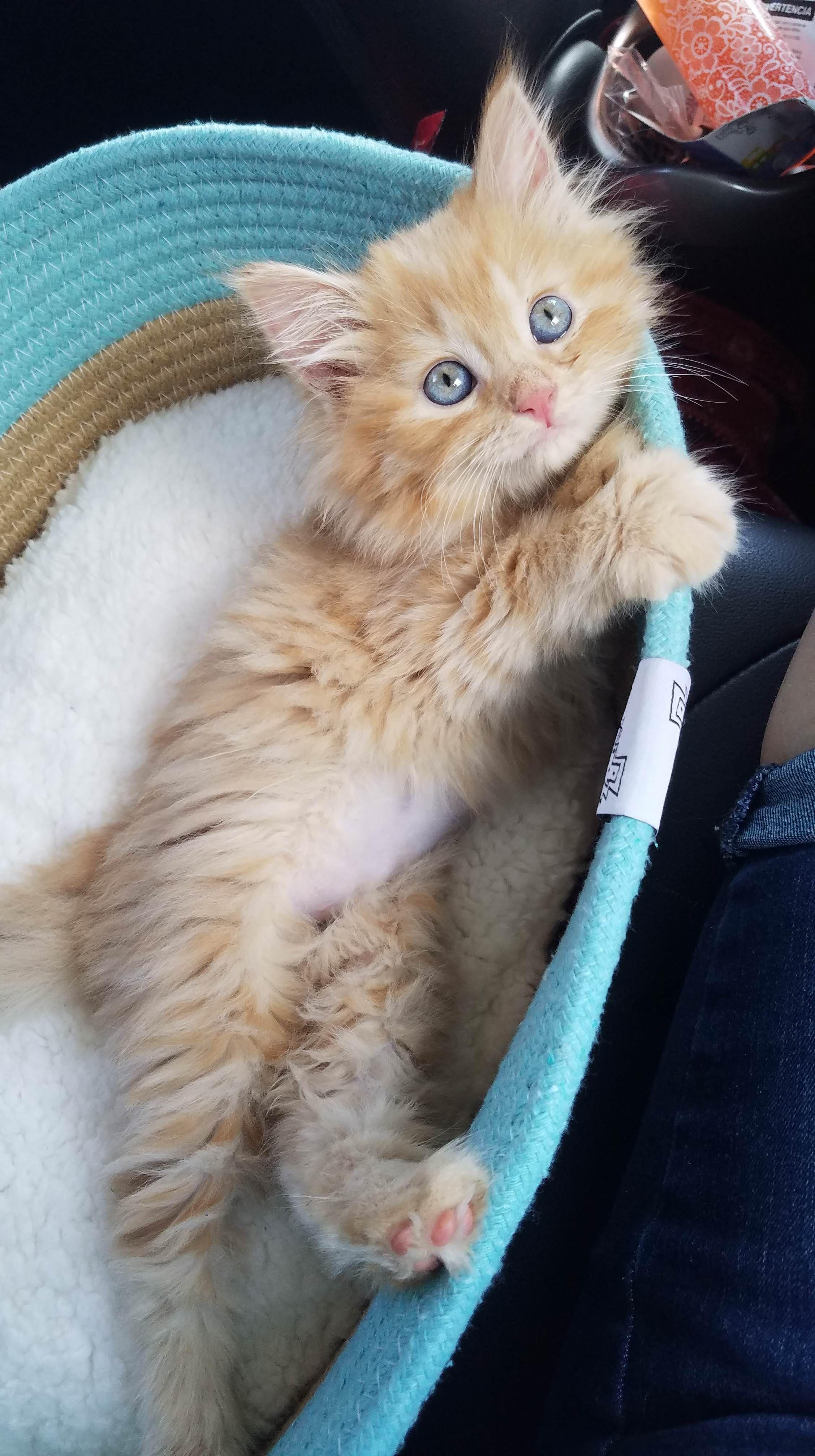 My New Baby Tigger Https Ift Tt 2yymeim Kittens Cutest Cats Cute Cats