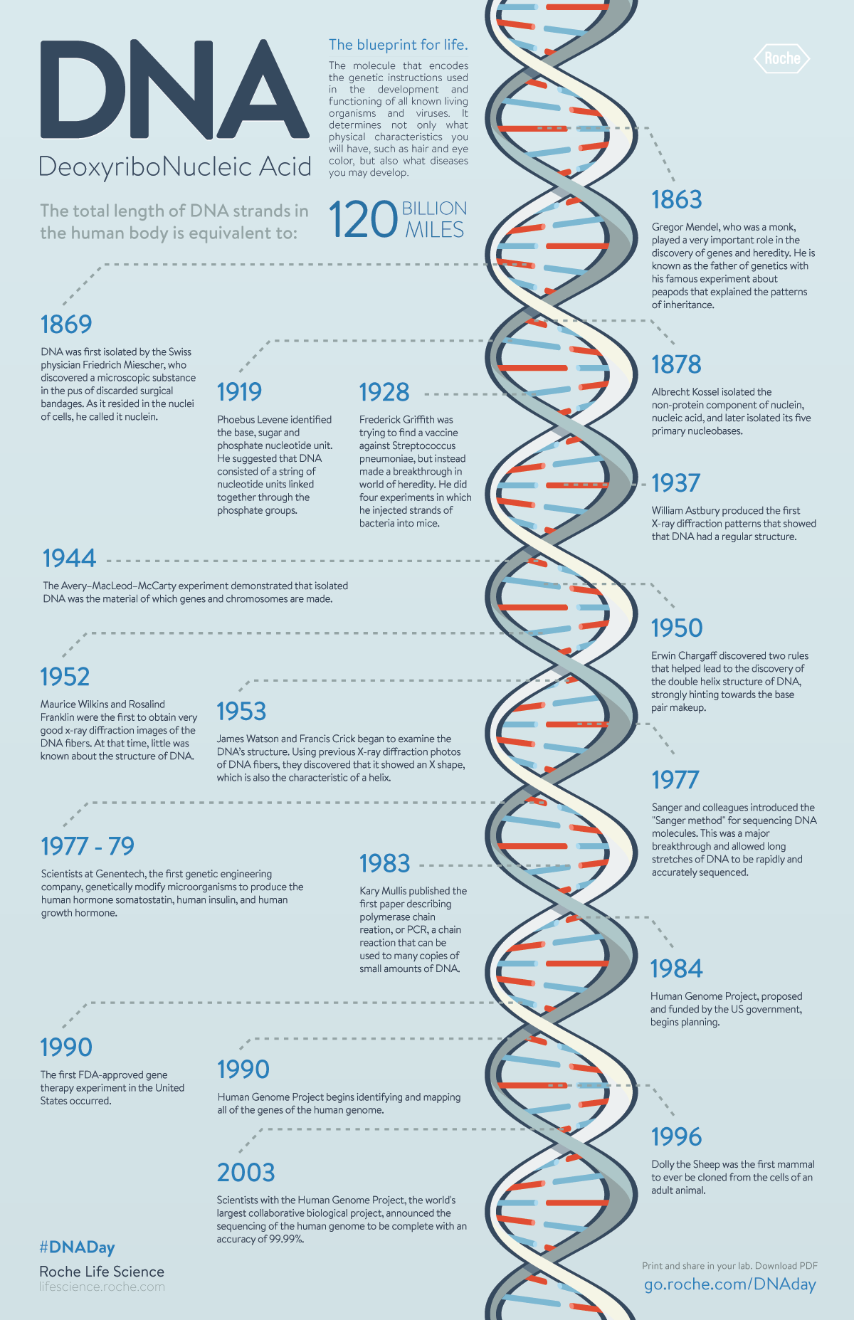 DNA Timeline In 1953, James Watson, Francis Crick, Maurice Wilkins, and Rosalind Franklin and collea