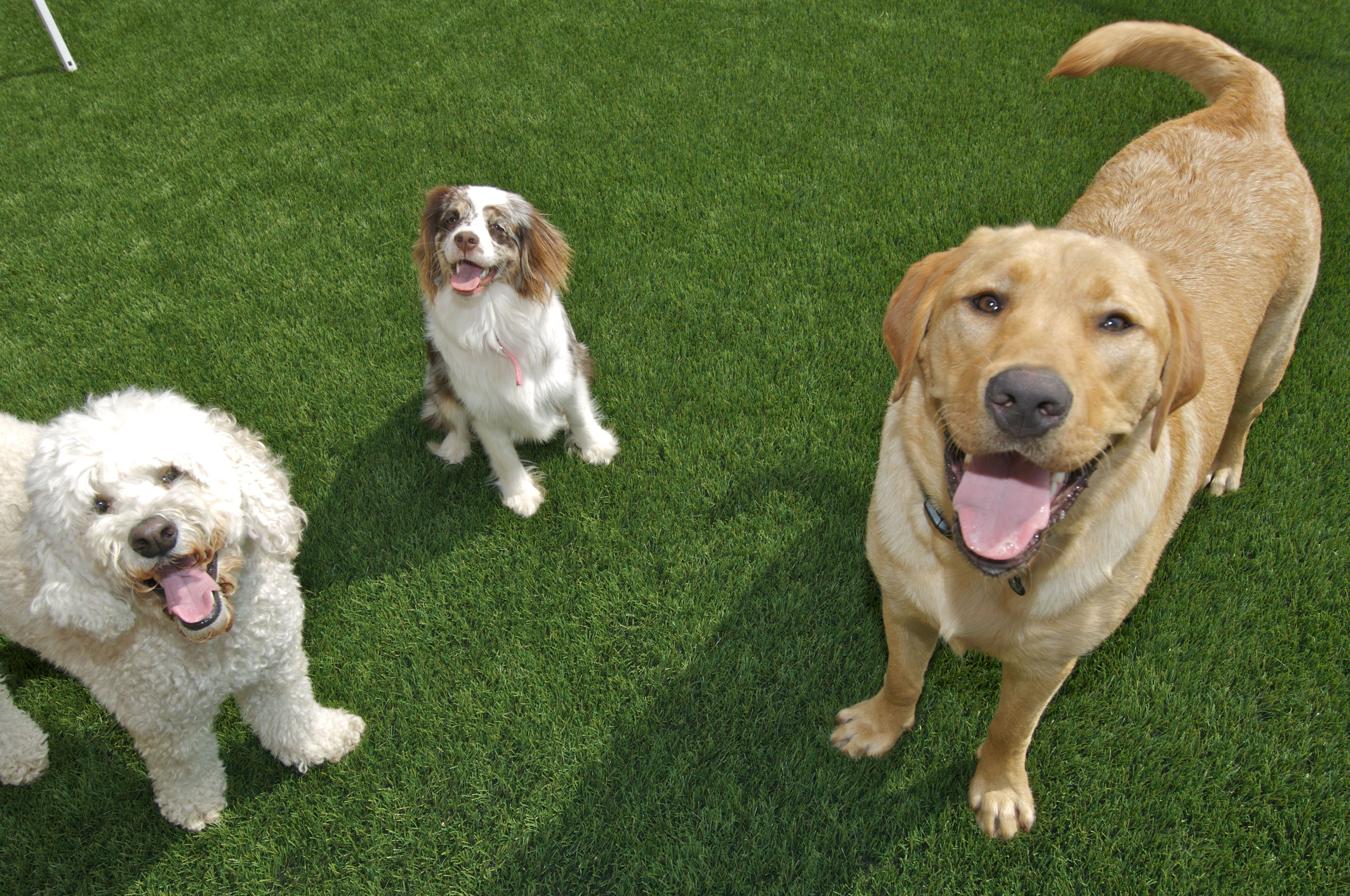 Dogs are a BIG fan of EasyTurf! l pet l