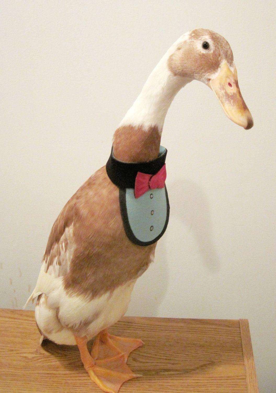Partyfowl Bow Tie Bib Costume For Pet