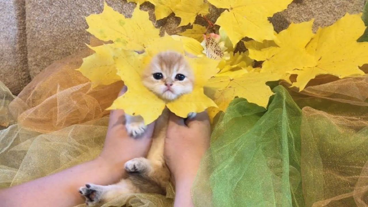Pin By Carol Niebling On Smiles Kittens Cutest Cute Cats Pretty Cats