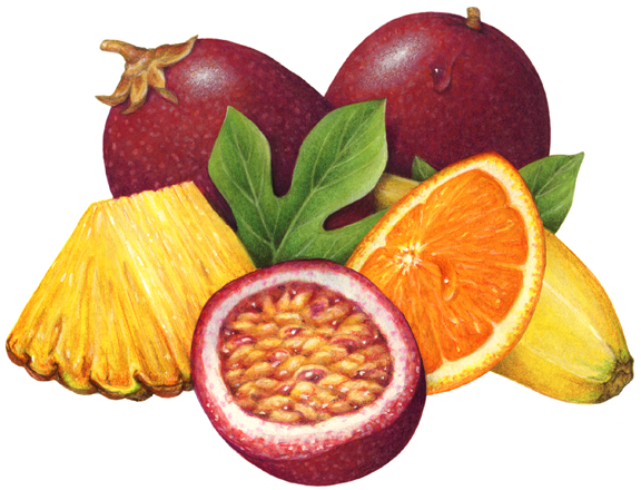 Pin On Tropical Fruit Illustration