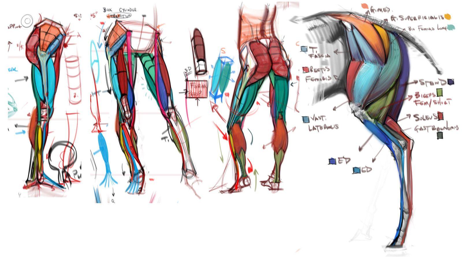 Comparative Lecture Legs by mhampton - Michael Hampton - CGHUB via ...