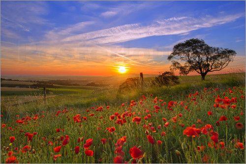 Poster Sonnenaufgang Uber Einem Feld Von Mohnblumen Bilder Sonnenaufgang Sonnenuntergang Tapete Schone Landschaften