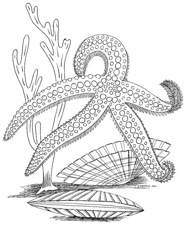 Pin On Blank Coloring Pages