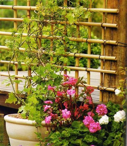 Trepadeira em bambu | Aménagement jardin recup, Bambous jardin, Idées bambou