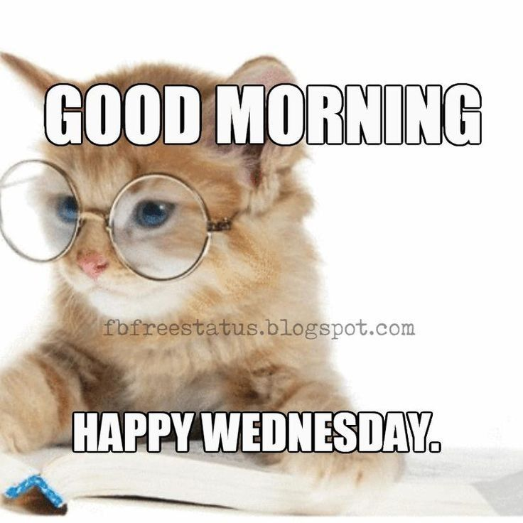 Morning Good Morning Wednesday Funny Good Morning Memes Funny Wednesday Memes