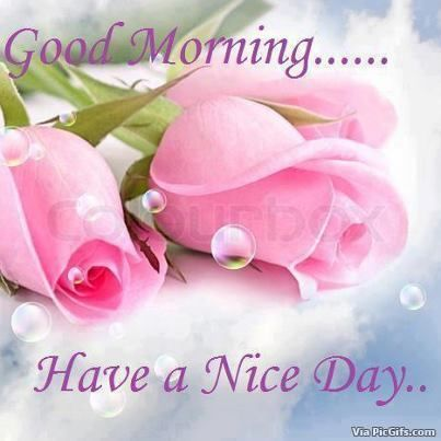 Pink Roses And Bubbles Good Morning Wishes With Images Good