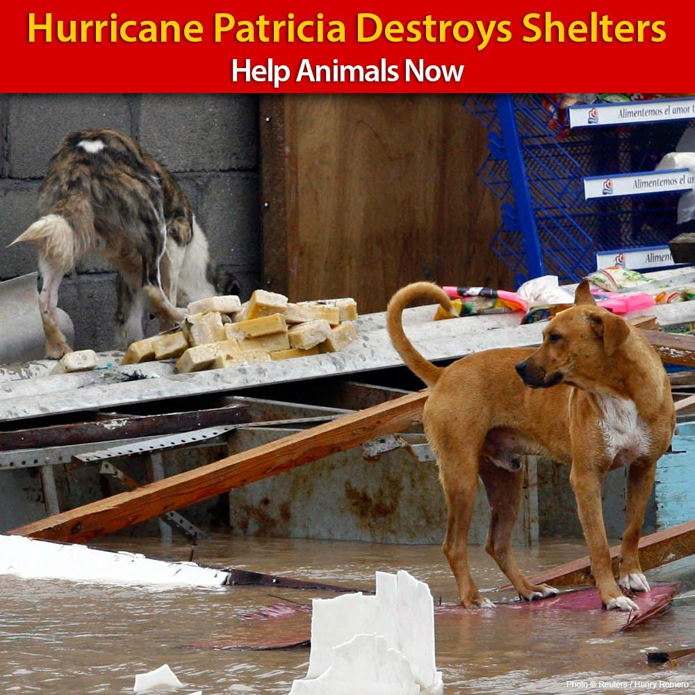 Help us provide help to the animals affected by Hurricane