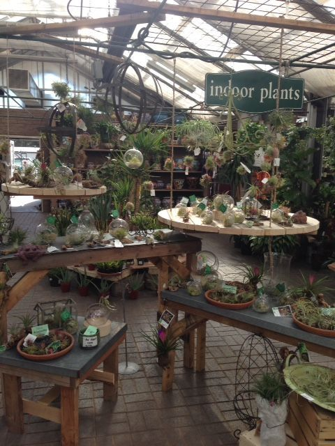 Pin By Lydie C On Fleur | Pinterest | Garden Center Displays, Display And  Plants