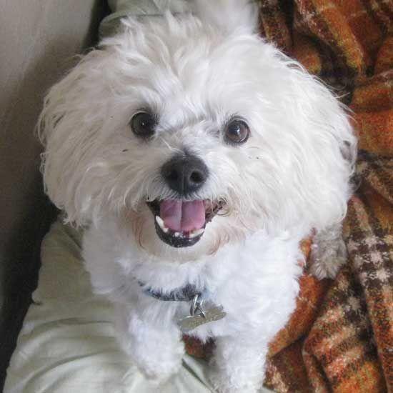 Adopt A Pet Dog Adoption Dog Love Animals